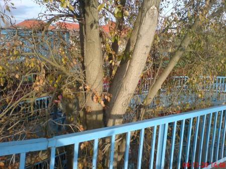 A kerékpár(os) környezetbarát. Megőrzött fa a kaposvári felüljáróban